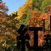 今が紅葉の見頃の高尾山には午前中に来るべき