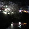 さくら 桜 サクラ そして春の食。