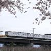 長野電鉄村山橋周辺の桜(2)