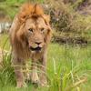 2018年9月30日~10月6日 ケニア旅行記-マサイマラ国立公園(2/5)