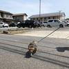 リードがあるとなぜ猫はかたまりやすくなるのでしょう?