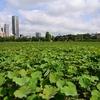 🌿上野 不忍池と上野公園❀