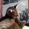 猫ちゃんのように、日向ぼっこをしたいなあ・・・1日があっという間に過ぎて、今は眠りたい。
