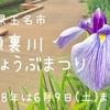 高瀬裏川花しょうぶまつり(熊本県玉名市)