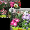 〈ココロノイロ〉☼花の苗を植えたよ☼