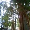 熊野古道体験