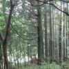 森にいます