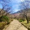 梅の名所『熱海梅園』で思いっきり自然を楽しむ休日