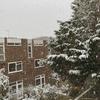 Snowing!イギリスで初めての雪⛄️