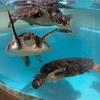 高知県室戸市のむろと廃校水族館は、廃校リノベーションのお手本だった