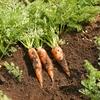 野菜を子供が嫌いな理由。子供にとって野菜は未知の食べ物!