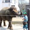福山市立動物園の見所とおすすめイベントをご紹介!
