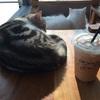 チェンライの猫カフェ CAT n A CUP でぬこ萌え死にした私
