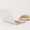 ブログ・アフィリエイト初心者はフォローすべき!おすすめTwitterアカウント7選