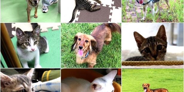 9月20日から動物愛護週間〜京都動物愛護センターに行ってきた!〜
