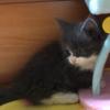☆ 猫 🐈🐱😻😼 & 彦根城🏯 ひこにゃん & 蕎麦🍜 桜エビ🦐天丼