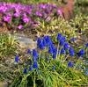 春の小さな花々