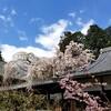 【京都】『十輪寺』に行ってきました。 京都観光 京都旅行 国内旅行 社寺めぐり 京都桜