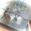 【鍼灸】ふくらはぎのシコリと亀ネコ>>モフモフ画像付き