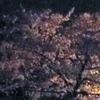 灯に一樹明るき花月夜
