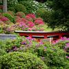 根津神社つつじ祭り 2017年のツツジの見頃は例年より遅め