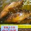 2019年10月7日 小浜漁港 お魚情報