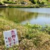 大池(和歌山県和歌山)