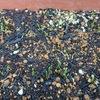 葉ネギ発芽!・・・コンパニオンプランツとしての働きもあるお役立ち野菜