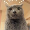雄弁な猫の耳
