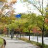 キバナノツキヌケホトトギスが開花した  秋が深まって街路樹の色づきが美しい