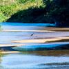 🦜野鳥の回【93】水辺の秋(アオサギ・ハクセキレイ・セグロセキレイ)