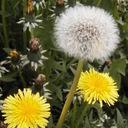 あすも短歌の花が咲く