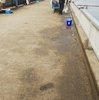 大樹寺店発 春の釣り公園調査