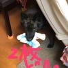 甲斐犬サンの猟期、始まるの巻〜北海道ハ10/1カラデスカラッ(๑•̀ㅂ•́)و✧