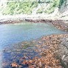 民族海藻図鑑ー海藻は生活の糧なりー