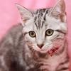 ツンデレ猫のモコ