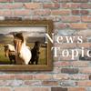 レイデオロ、秋に向けて放牧へ|競馬ニュース
