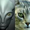 猫の宇宙人説って本当?スパイに来てる!?