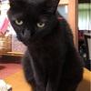 黒猫のさくらちゃん