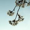 桜(と花の写真)、いっぱい撮ったなぁ〜