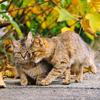 みかんの島の仲良し猫