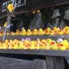 醜いアヒルの子は日本で白鳥になれるのか?