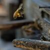 【花粉症の方必見】花粉症の治療法はどんなのがある?
