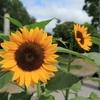 宇治市植物公園 スナップ写真