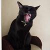 今日の黒猫モモ&白黒猫ナナの動画ー809