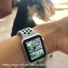 【Apple好き】Apple Watchを使い始めて半年、飽きたのか?