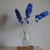 【花を飾る】#7 精悍な蒼の「デルフィニウム」