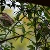 野鳥アラカルト