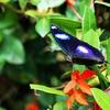 雨季のコタキナバル、あるいは熱帯雨林と蛍のクリスマスツリー (1)