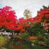 旭川の紅葉 Part1 北海道護国神社